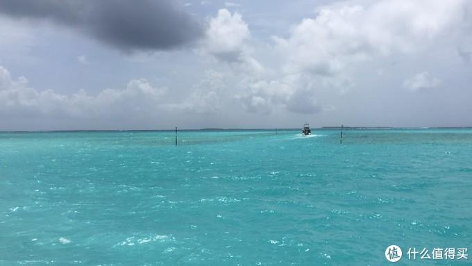 ▲水蓝蓝的神仙珊瑚