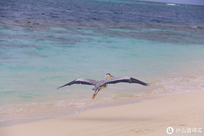 ▲海边吃饭和海鸥嬉戏 太浪漫了吧