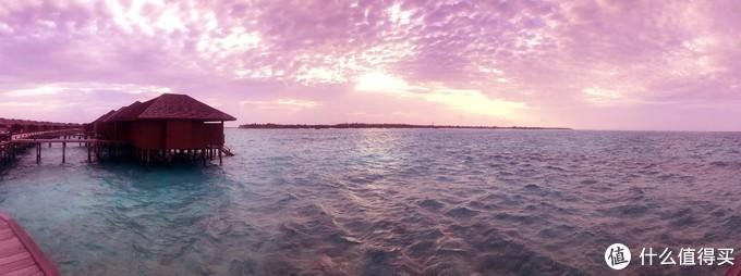 ▲神仙珊瑚美得难以置信
