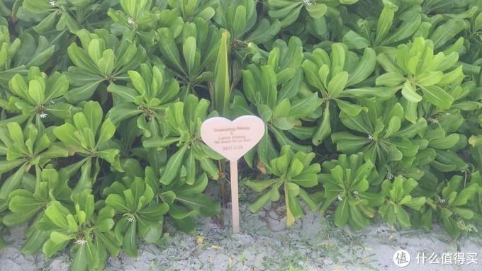 马尔代夫考察15岛:神仙珊瑚、瓦度、阿玛瑞、芙花芬、瑞喜敦(一)
