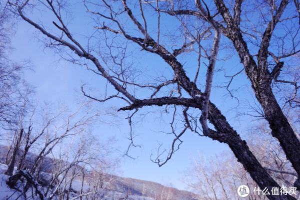 附近的枯树