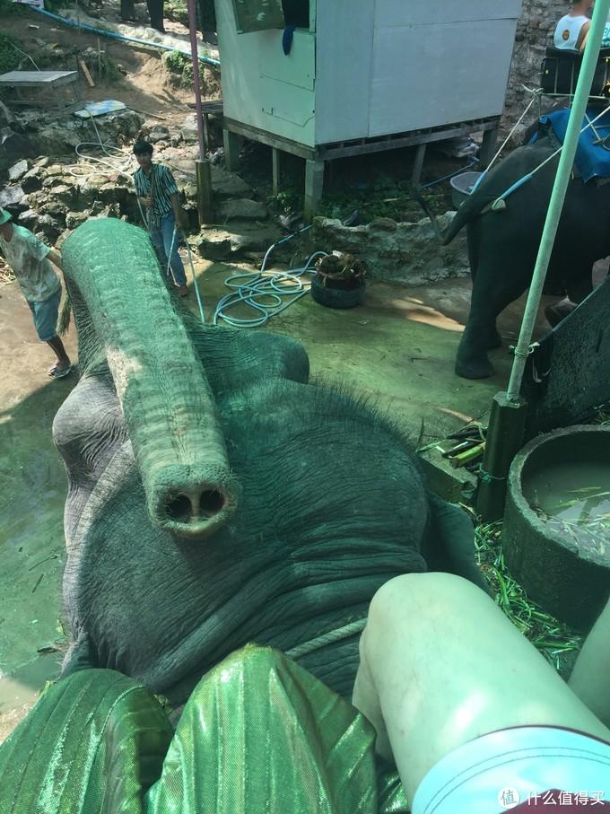 我们刚坐上,大象就朝我们吹了一鼻子,艾玛