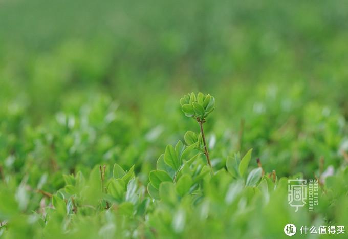 换上小白,拍个花花草草的特写清淡的颜色特别舒服