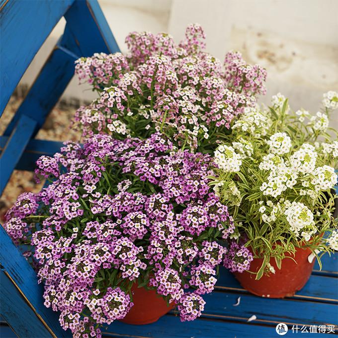 独立盆栽也是美美哒,而且有香气~