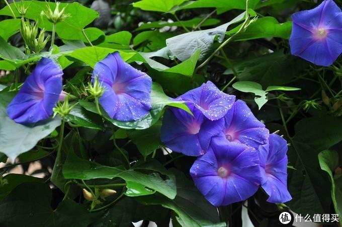 喜欢她,送她一束花。爱她,就送她一个花---园,来搞花花收藏(附带海量图片和介绍)