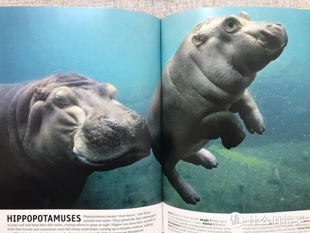DK&史密斯学会动物百科图解10册精装(含4GU盘)