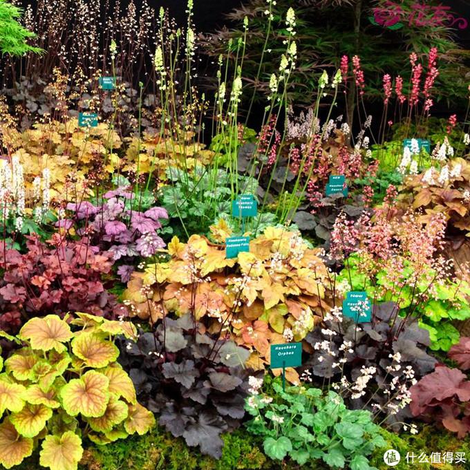 品种很多,主要做观叶植物