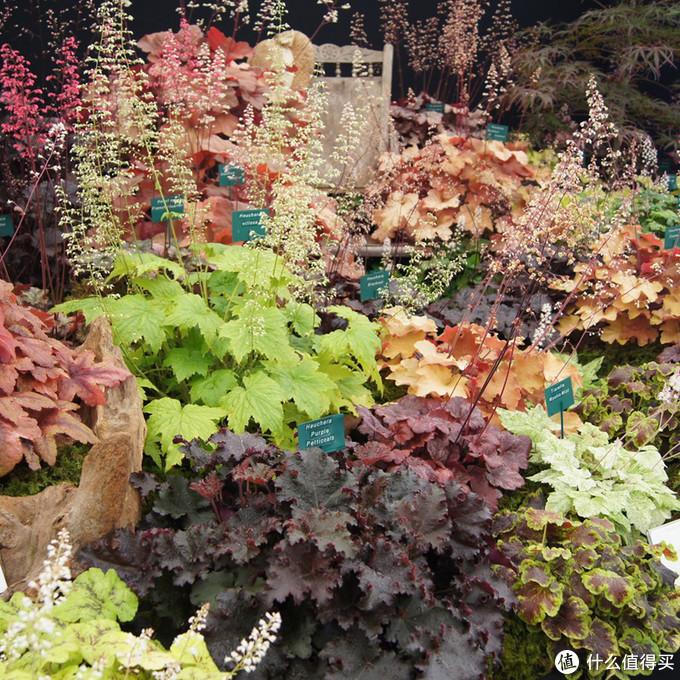 除了颜色,叶子的形态也有很多差别,方便营造出不同的质感和层次