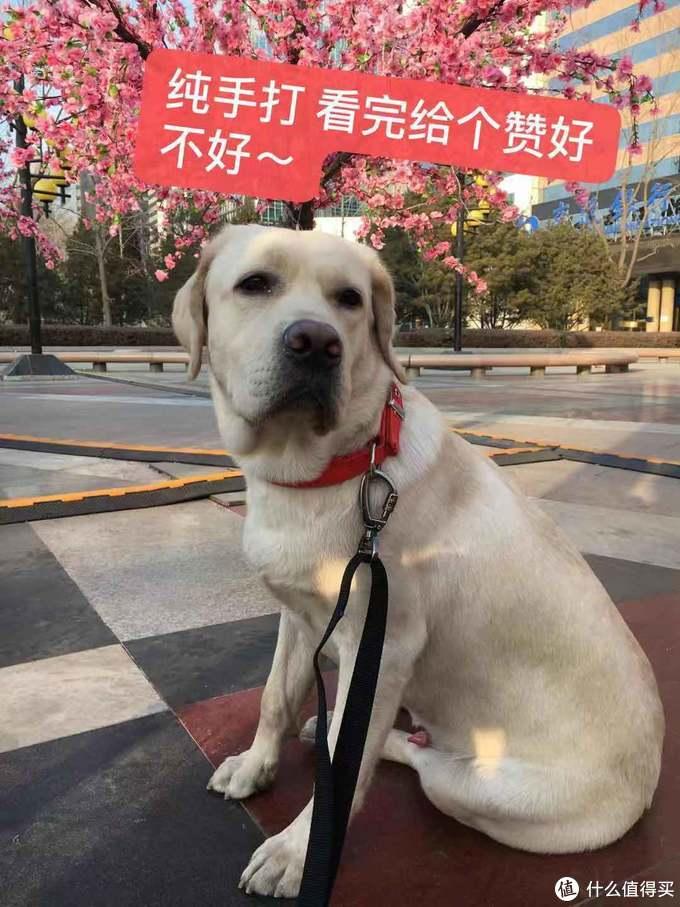狗子的日常养护及训练 经验分享(多图)