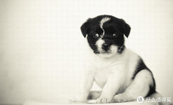 这是我家狗子里的老大满月照,名字叫呆头,还有四位以后介绍