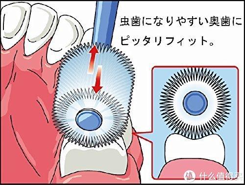 每日一牌:日本STB/蒲公英 360do BRUSH 牙刷品牌