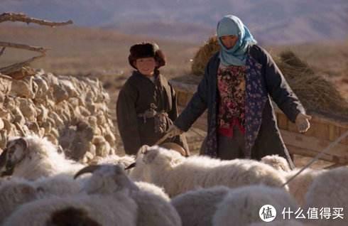 一家人的收入就靠这一群羊