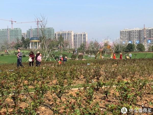 宁波植物园,一个春暖花开时值得去的地方…