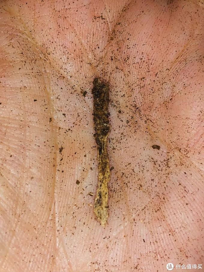 中空的根,一般说这是需要修剪的对象