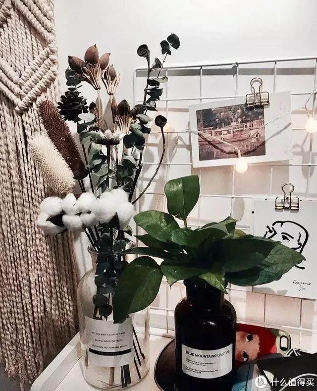 我有个小建议,给喜欢植物却养啥死啥的你!