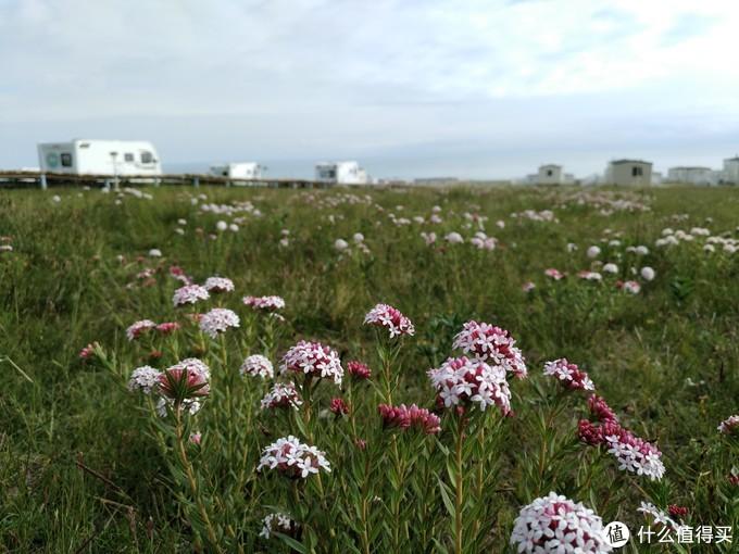 野花中的房车营地,大美青海湖