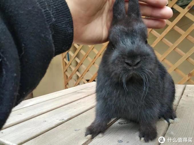 家有小兔初长成