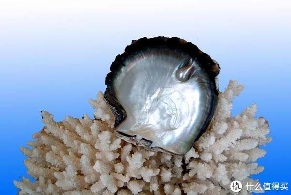马氏贝贝壳