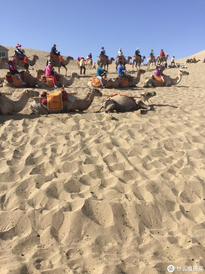 等待上沙丘的驼队