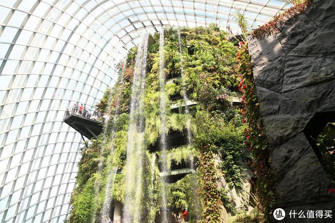 滨海湾花园云雾林——全球最高的室内瀑布