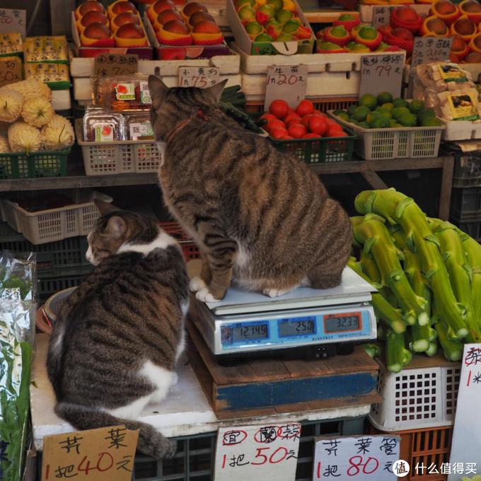 老板你这个猫多少钱一斤