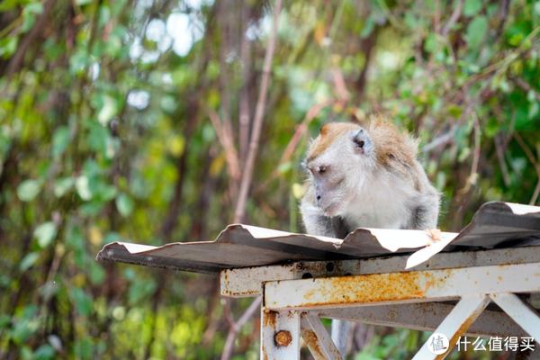 发现一只猴子