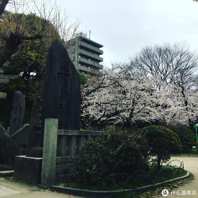 我的东京之旅(1)浅草篇