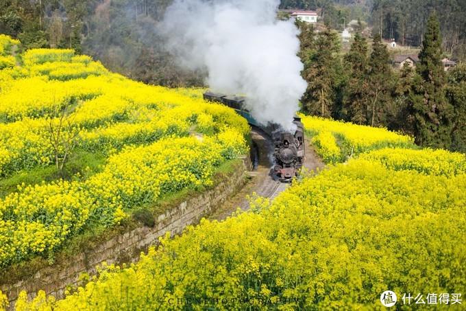 在四川有一辆至今仍在运行的蒸汽小火车,每年赏花季就会成为网红