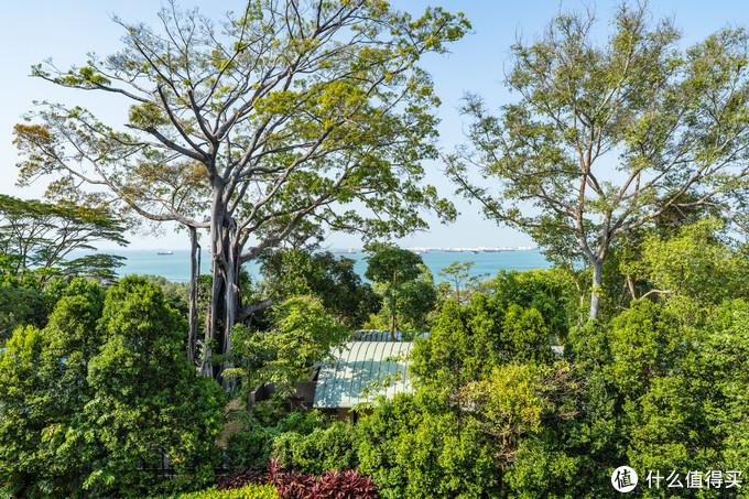 """2018年""""金特会""""地址,新加坡嘉佩乐 (Capella Singapore)"""