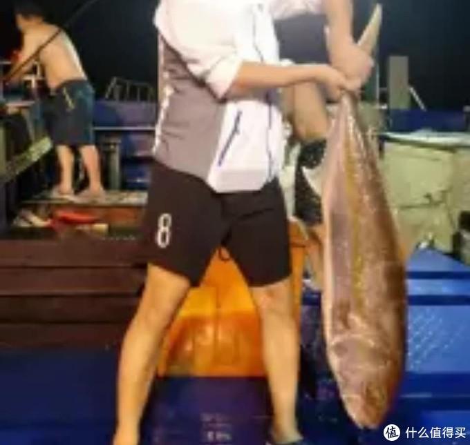 刺身爱好者的吃鱼之路,兼市面常见深海鱼测评(一)