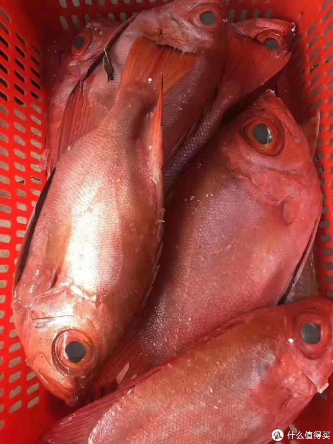 日料测评 篇二 刺身爱好者的吃鱼之路,兼评市面常见深海鱼(二)