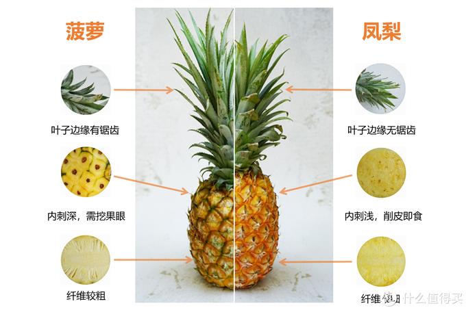 菠萝和凤梨,傻傻分不清楚?