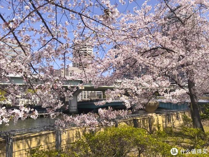 樱花季去日本买什么?这些樱花好物一定要get!