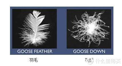 羽绒和羽毛