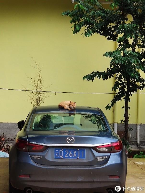 car和cat