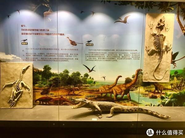 恐龙化石(不知真假)及解说
