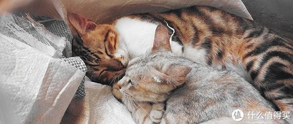 新手必看!导致犬猫呕吐腹泻的常见原因与处理方法