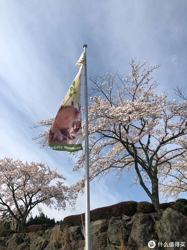 公园门口也有水豚的小旗子