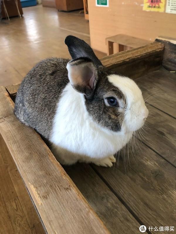 眼神犀利的兔叽