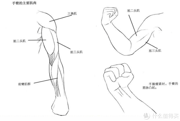 怎么画手臂