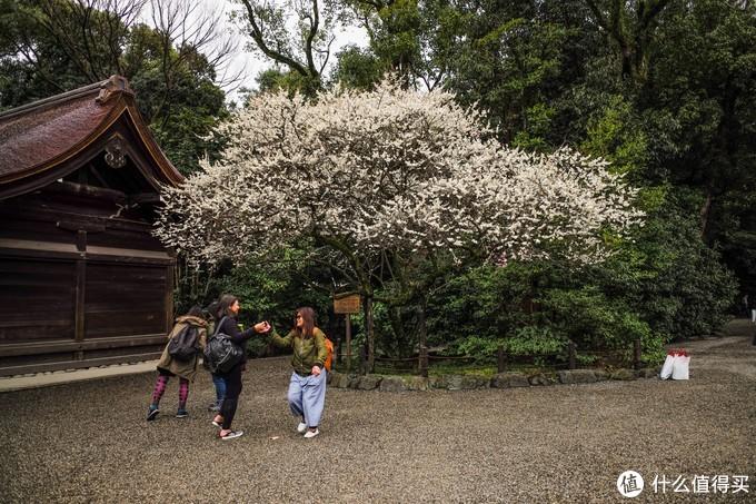 几个日本小姐姐都围着这颗梅花树拍照留念