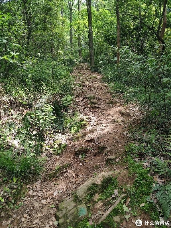 这种土路里露出石块的坡路非常常见