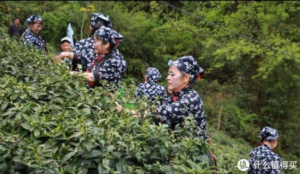 茶旅产业助力乡村振兴 首届黄山茶园坪革命老区茶乡开园节圆满举行