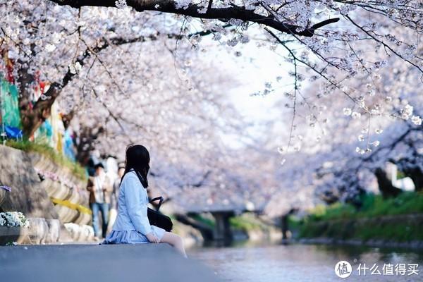 樱花季行程制定和花期预测