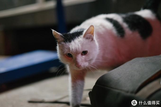 小卖部老板钟爱白猫,上一只小白死后这一只小白就来接替了它的位置,但总感觉缺少了一丝灵性