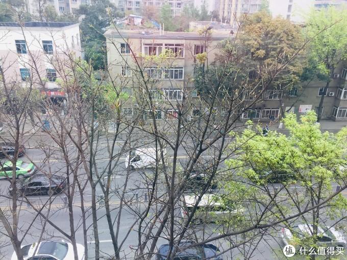 还能看到树上一抹绿