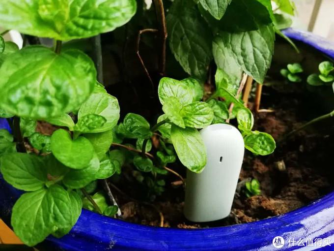 用科技修身养性:花花草草监测仪+Home Assistant实现家庭种植自动灌溉系统