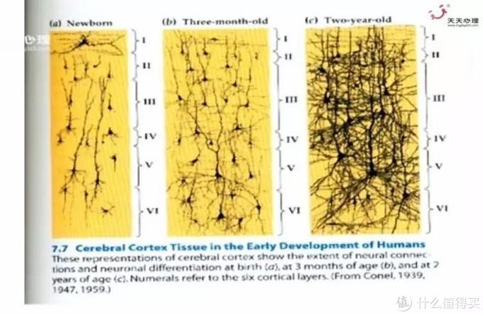 帮助0-6岁孩子最大化开发大脑,各个关键期需要提供这些关键帮助(上)