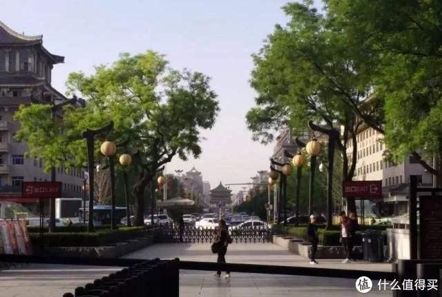 ▲西安街头的槐花(via网络)