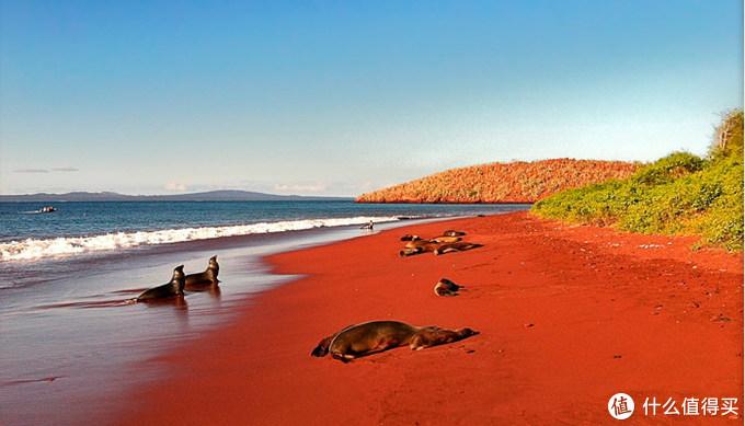 赤道的岛上竟然有企鹅?还有哥斯拉一样的丑鬣蜥!
